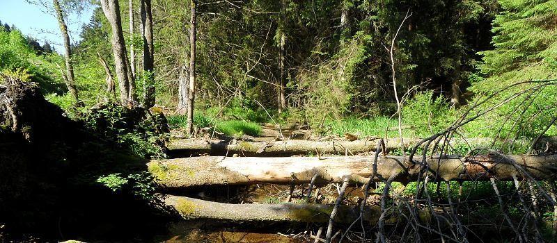 Wildnistrail Höfen-Einruhr (1.Etappe)