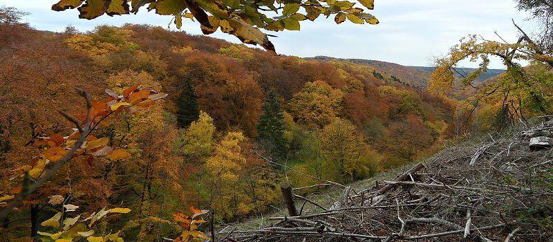 Wildnistrail Gemünd-Heimbach (3.Etappe)