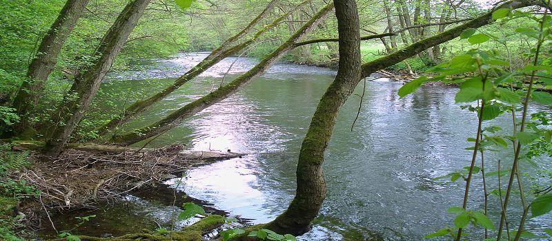Biber, Bäche Eichenwälder