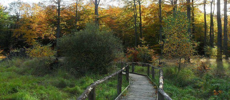 Bodenroute im Hochmoor auf Holzstegen