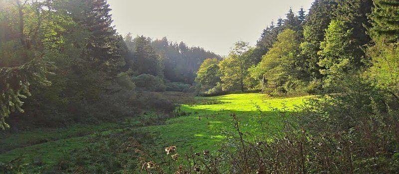 Broicher Wald-Tour 22 (Schleiden)