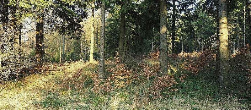 Bunkerweg (Simmerath)