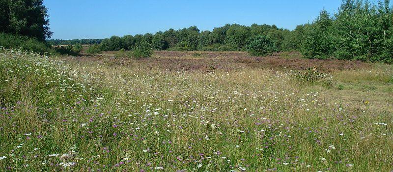 Durch Wald, Feld und Heide