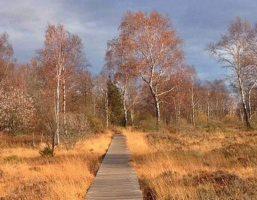 Heide, Moor und Wald im Hohen Venn
