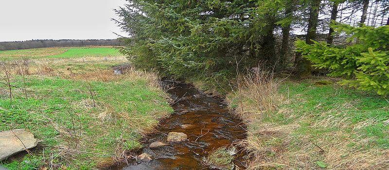 Moor-und Heidelandschaft  Simmerath