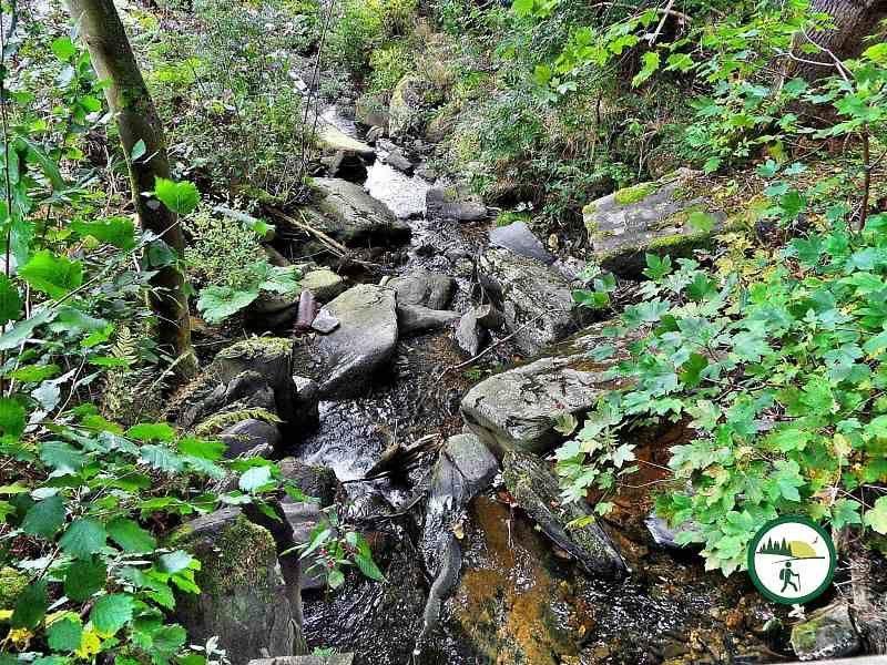 Flussbett Am Wegesrand