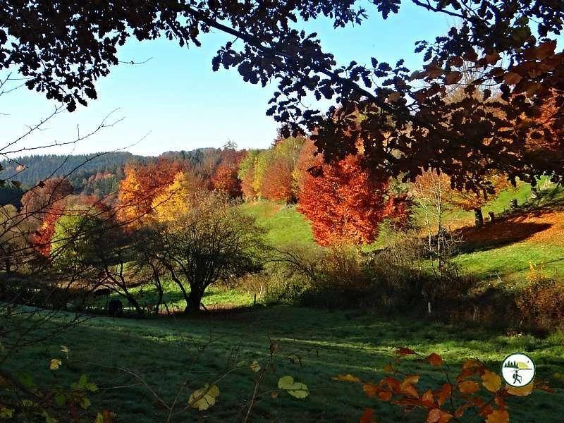 Heckenland Route Panoramabild