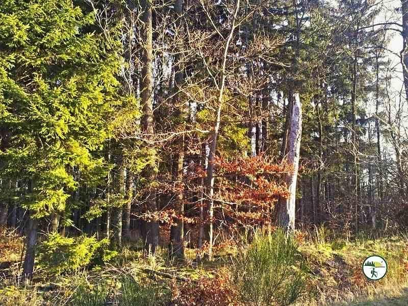 Herbst Im Broicher Wald