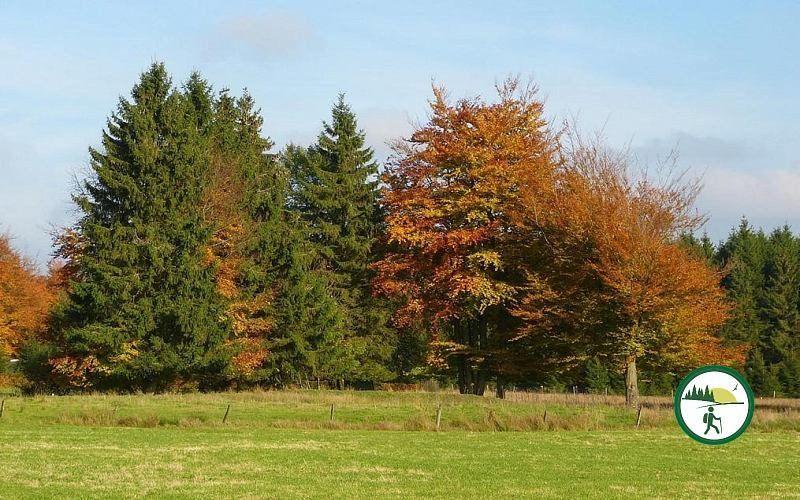 Herbst Im Konzener Wald