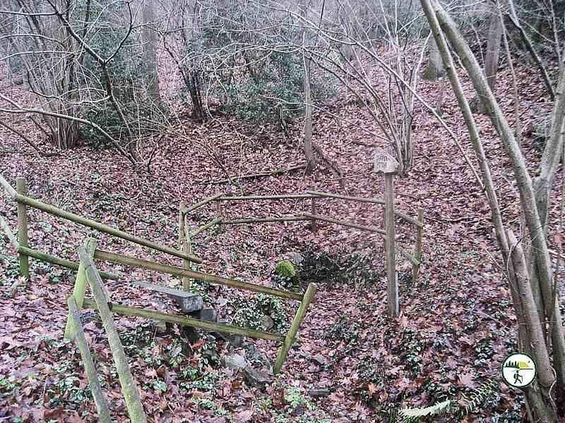 Im Wald Bei Gey