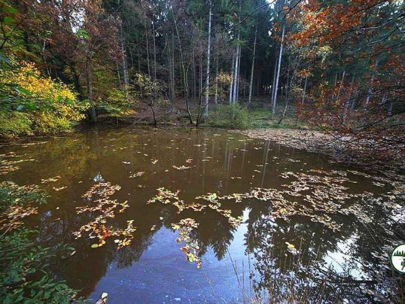 Kleiner See Tümpel Im Meroder Wald