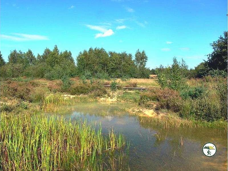 Tümpel In Drover Heide