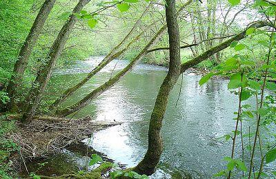Biber Bäche Eichenwälder