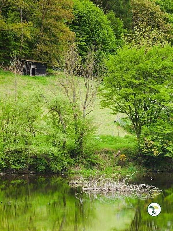 Waldlehrpfad Einruhr Dedenorn