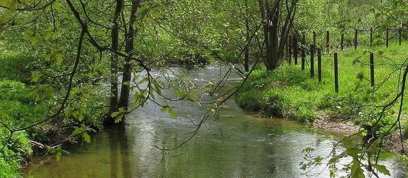 Flussgold