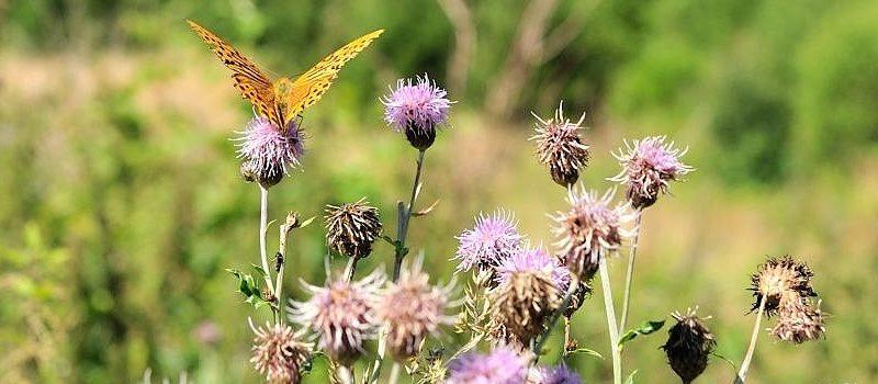 Im Tal der Schmetterlinge