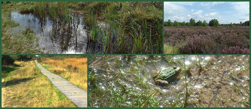 """Naturschutzgebiet """"Drover Heide"""""""