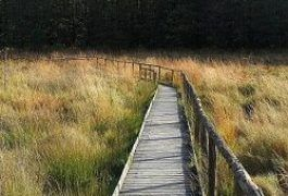 Todtenbruch Moor