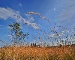 Landschaft Im Wind