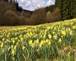 Zu den Wiesen am Hohnbach